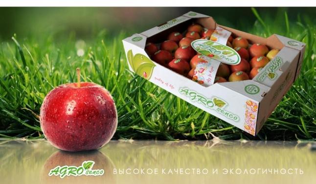 Фото - Экспорт отечественных овощей и фруктов в высокоразвитые страны мира.