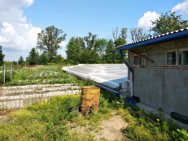 Фото - Вирощування зелені в теплиці
