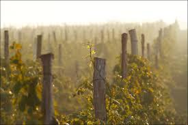 Фото - Производство высококачественных вин