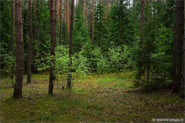Фото - Производство натуральных экстрактов из растительного сырья.