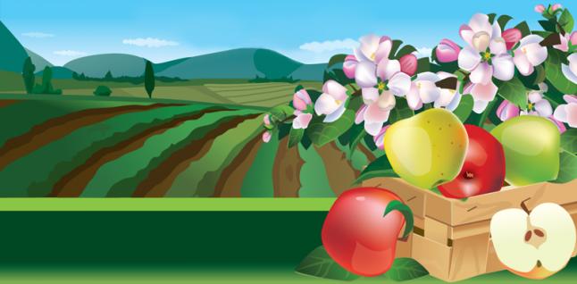 Фото - Яблочный сад на карликовом подвое,   капельный полив,   фруктохранилище с РГС,   сортировка и упаковка. Окупаемость 4-5 лет.