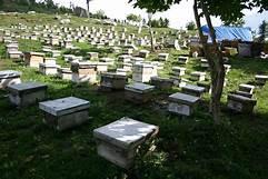 Фото - Пчеловодство