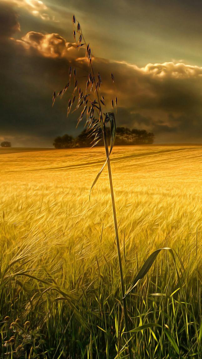 Фото - Harvest farm