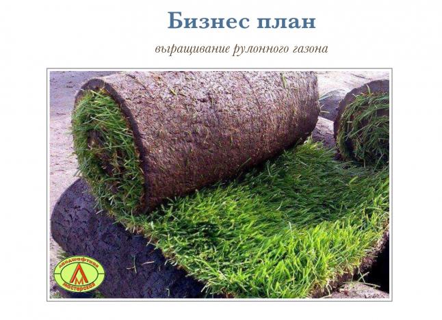 Фото - Выращивание и реализация рулонного газона в Киевской области