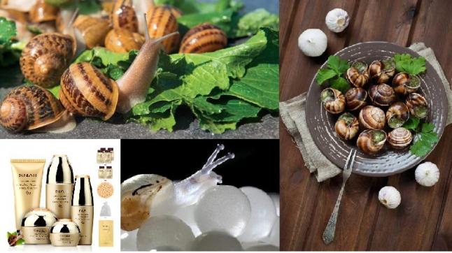 Фото - Вирощування та реалізація їстівних равликів