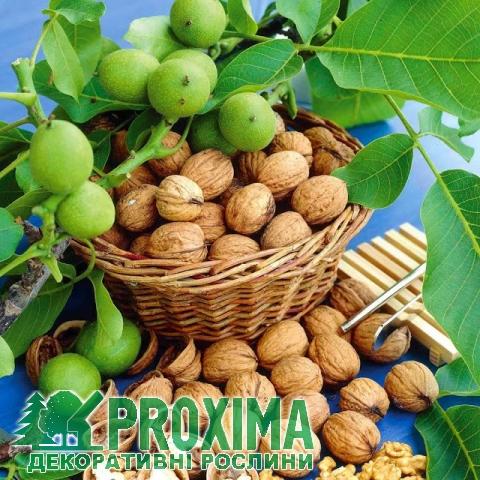Фото - Экспорт грецкого ореха в Европу