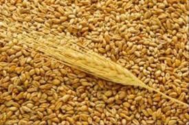 Фото - Оптова торгівля зерном