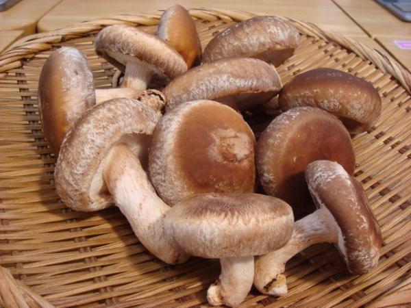Фото - Выращивание грибов шиитаке в Украине