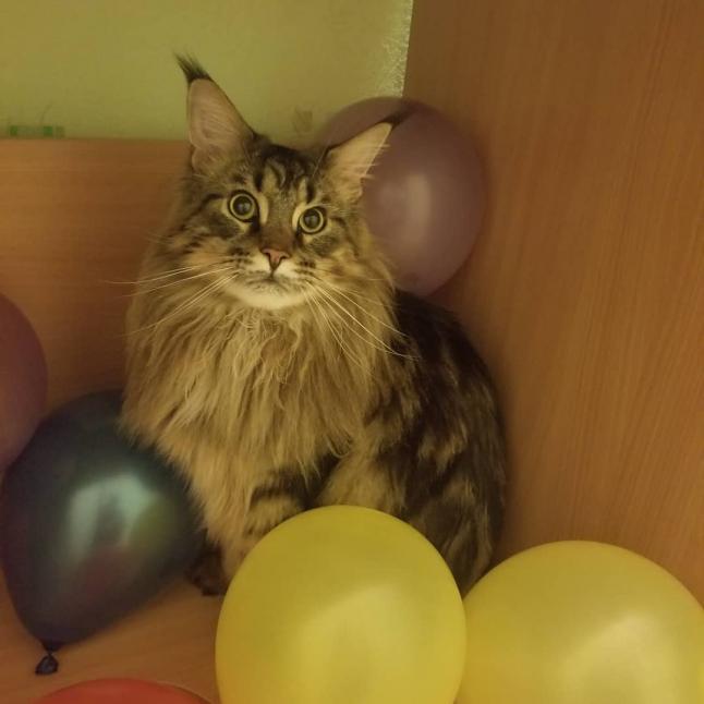 Фото - Гостиница для кошек