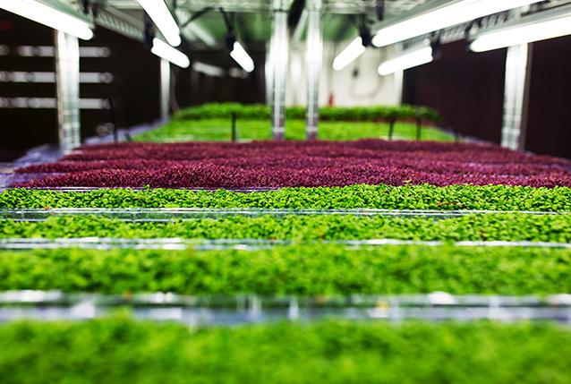 Фото - Агротуризм и пищевая промышленности