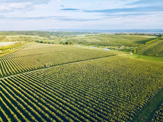 Photo - Apple farm