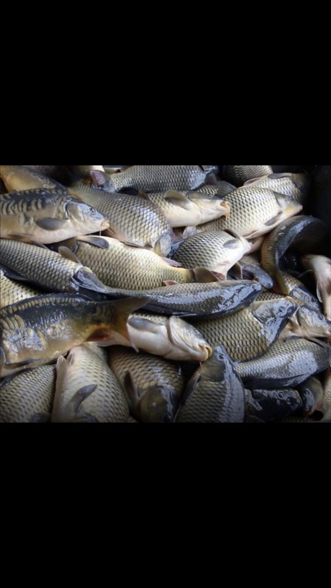 Фото - Жива риба