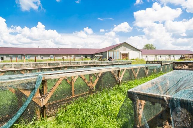 Фото - Выращивание и продажа улиток.