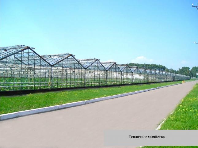 Фото - Выращивание овощей