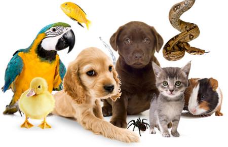 Фото - Товары для животных