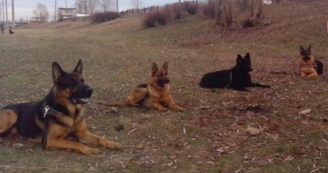 Фото - Создание дрессировочного комплекса для собак