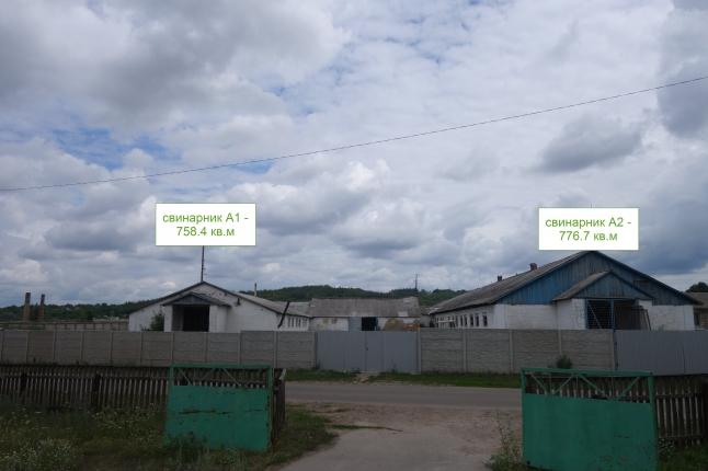 Фото - свиноферма в Киевской области, г. Ржищев