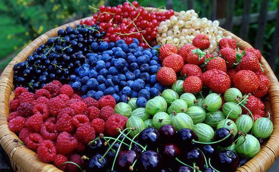 Фото - Выращивание  ягод