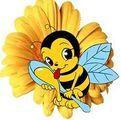 Фото - Скупка продажа в Европе пчелопродуктов