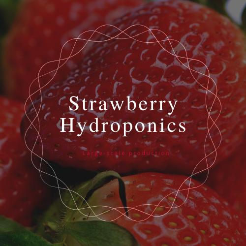 Фото - Strawberry Hydroponics