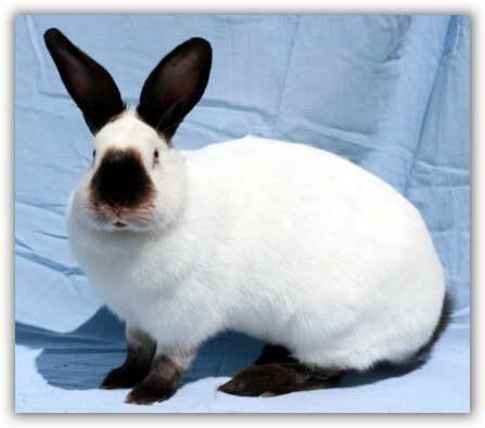 Фото - Самый вкучный кролик