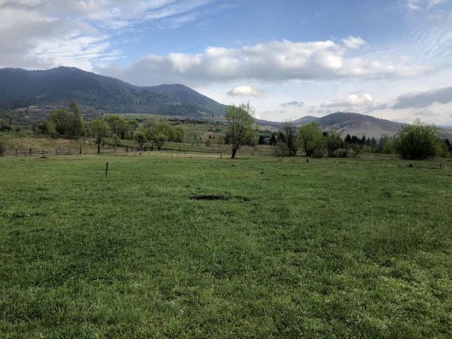 Фото - Конная ферма в Карпатских горах Закарпатья