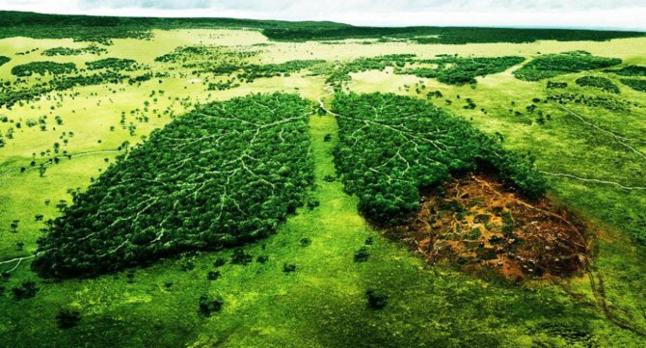 Фото - Відновлення нашої екосистеми