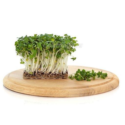 Фото - производство по выращиванию микрогрина