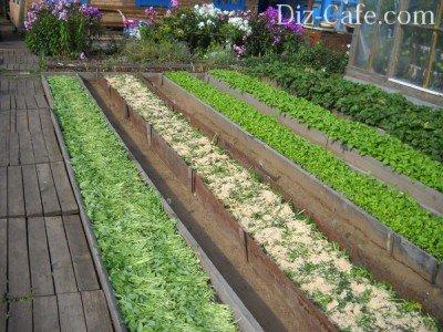 Фото - Выращивание зелени и овощей круглый год в теплицах