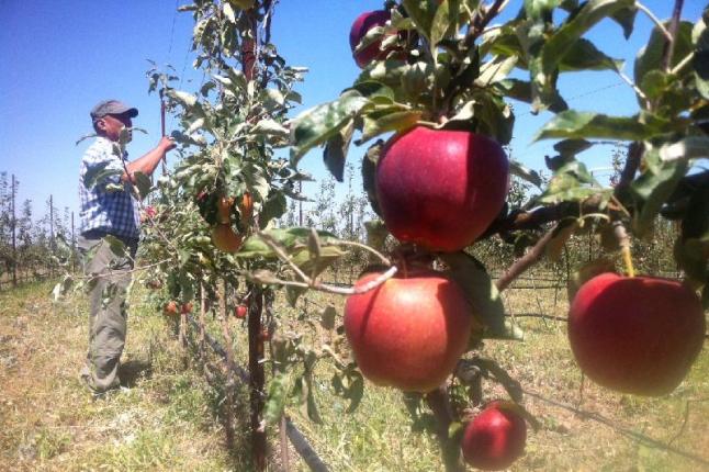 Фото - Выращивание продуктов питания