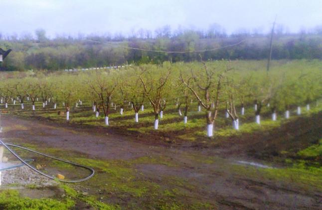 Фото - Продам фермерское хозяйство, сады, бизнес. Срочно!