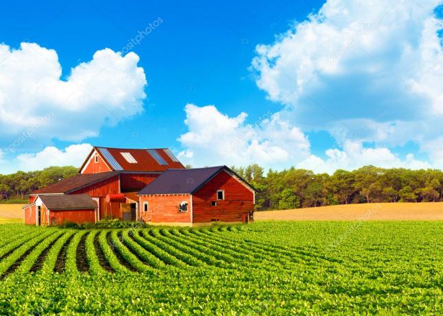 Фото - Ts Farm