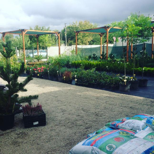 Фото - Торговля декоративными растениями