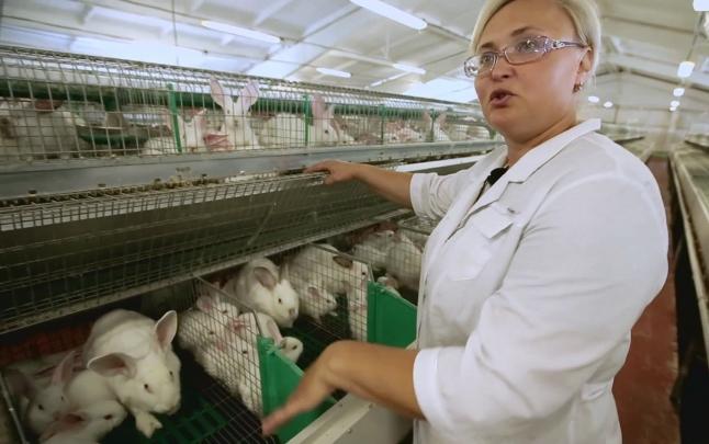 Фото - Промышленное производство мяса кролика