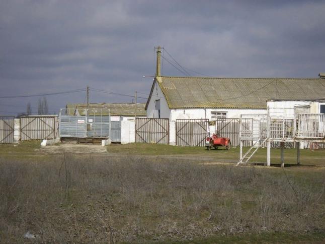 Фото - Ферма, животноводческий комплекс