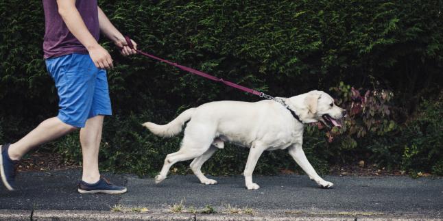 Выгул собак в Киеве