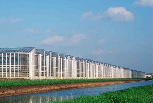 Фото - Вирощування томатів та квітів в теплиці Європейського стандарту.
