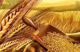 Фото - Оптовая торговля зерном