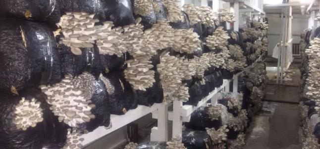 Фото - Создание фермы по виращиванию нескольких видов грибов
