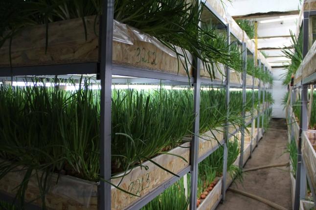 Фото - Продам действующий бизнес (выращивание зелени)