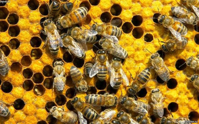 Фото - Пчеловодство как бизнес  ;)