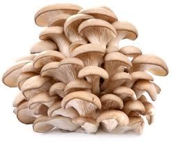Фото - Выращивание грибов