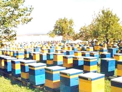 Фото - Розвиток Бджільництва в Україні
