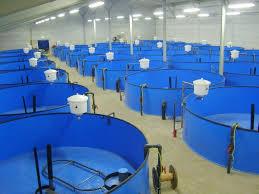 Фото - Создание рыбной фермы (УЗВ) от 24 тонн в год