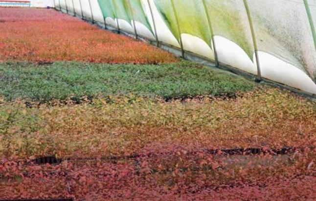 Фото - Постройка новых теплиц для производства продуктов питания