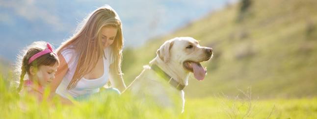Фото - Натуральное питание для собак