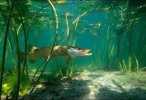 Фото - Виртуальная рыбалка