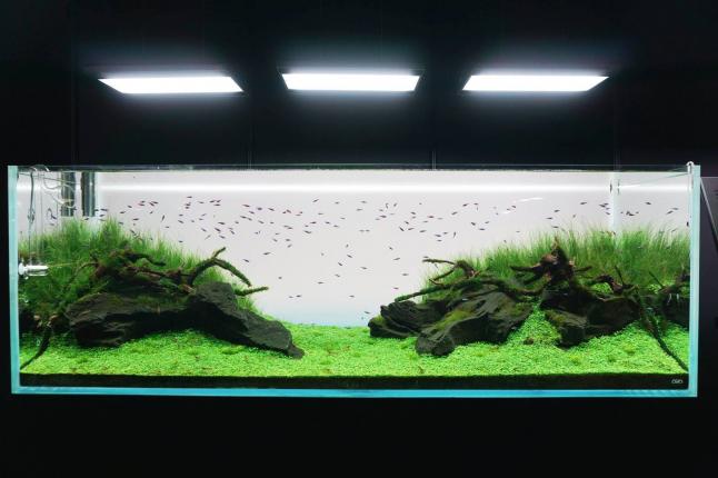 Фото - Сборные комплекты фито ламп на основе разных групп LED