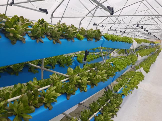 Фото - Выращивание зелени в теплицах методом аэропоники