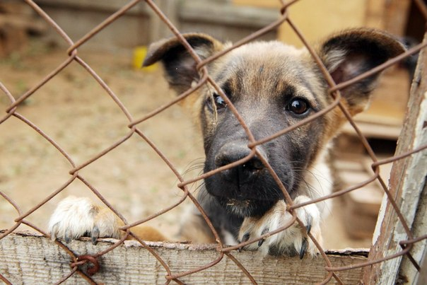 Photo - Helping animals and pet clothing store